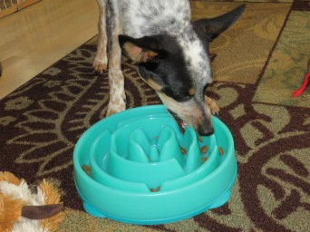Dog chewing food dish
