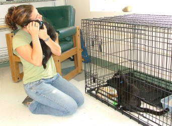 Volunteer with kittens at shelter