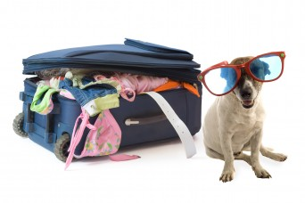 Dog wearing large sunglasses with packed suitcase