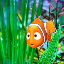 """Finding Nemo"" screen shot"