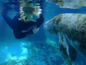 Underwater adventure with sea lions in the Manatee in Florida with Blue Water Ventures