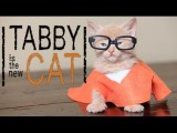 'Orange is the New Black' is the cat's meow